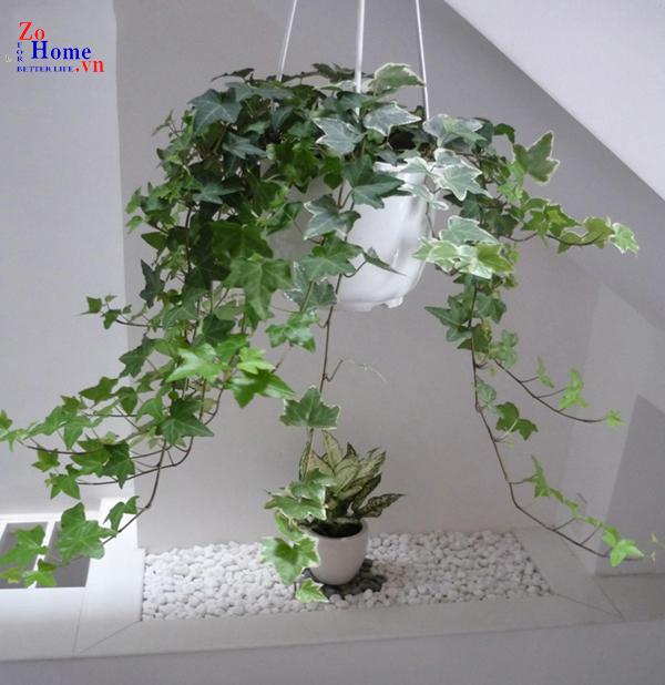 Top 5 loại cây phong thủy chống ung thư nên trồng trong nhà